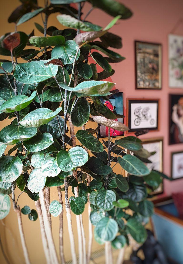 een plant per post
